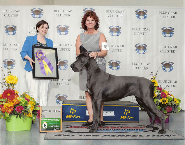 great-dane-500H-81214